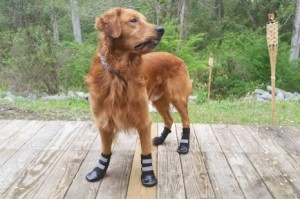 All Weather Neoprene Paw Protector with Reflective Velcro Straps