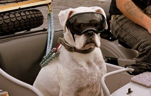 10. Rex Specs Dog Googles