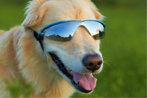 3. Doggles K9 Optix Dog Sunglasses