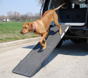 International Foldable Dog Ramp