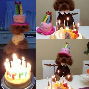 BroBear Dog Birthday Hat