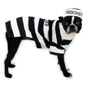 Canine Prison Pooch Pet Costume